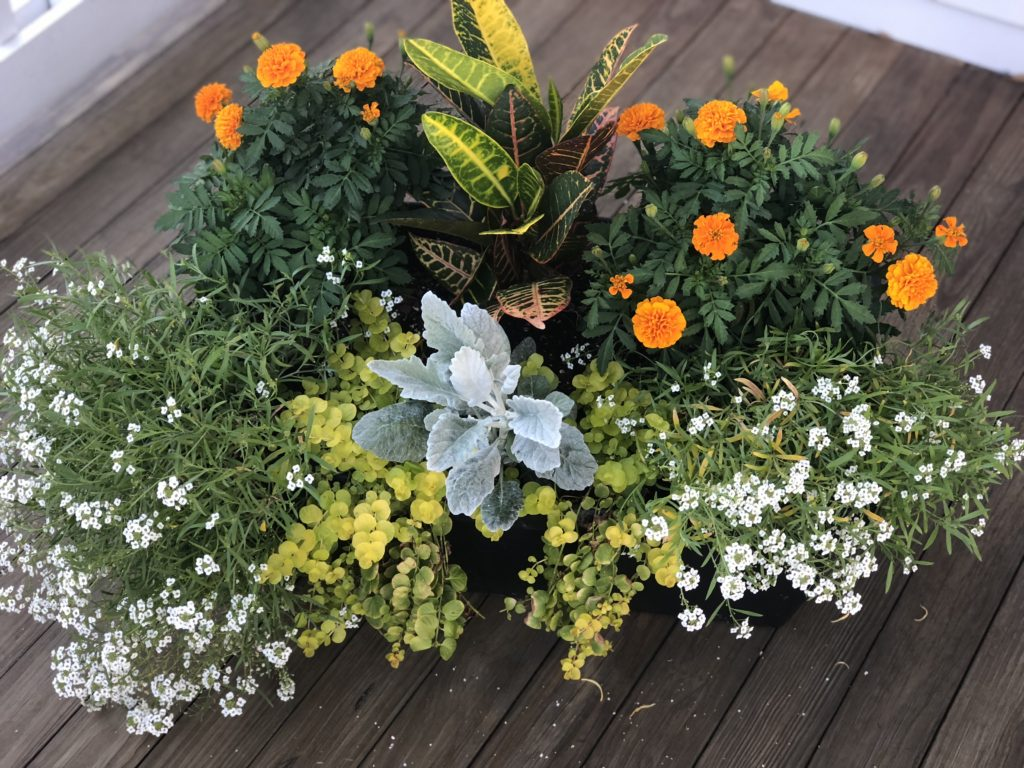 fall flowers planters