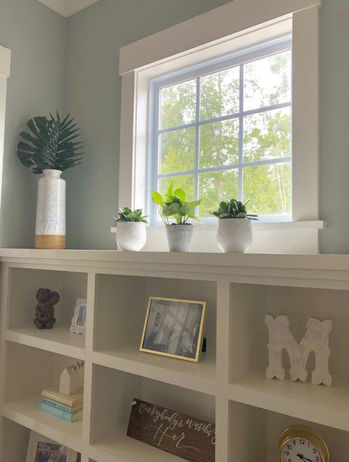 Easy house plants